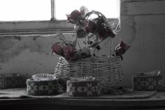 Hatchita Flowers • ©Greg Smith