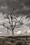 Sentinel • ©Greg Smith