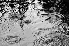 Rain • ©Greg Smith